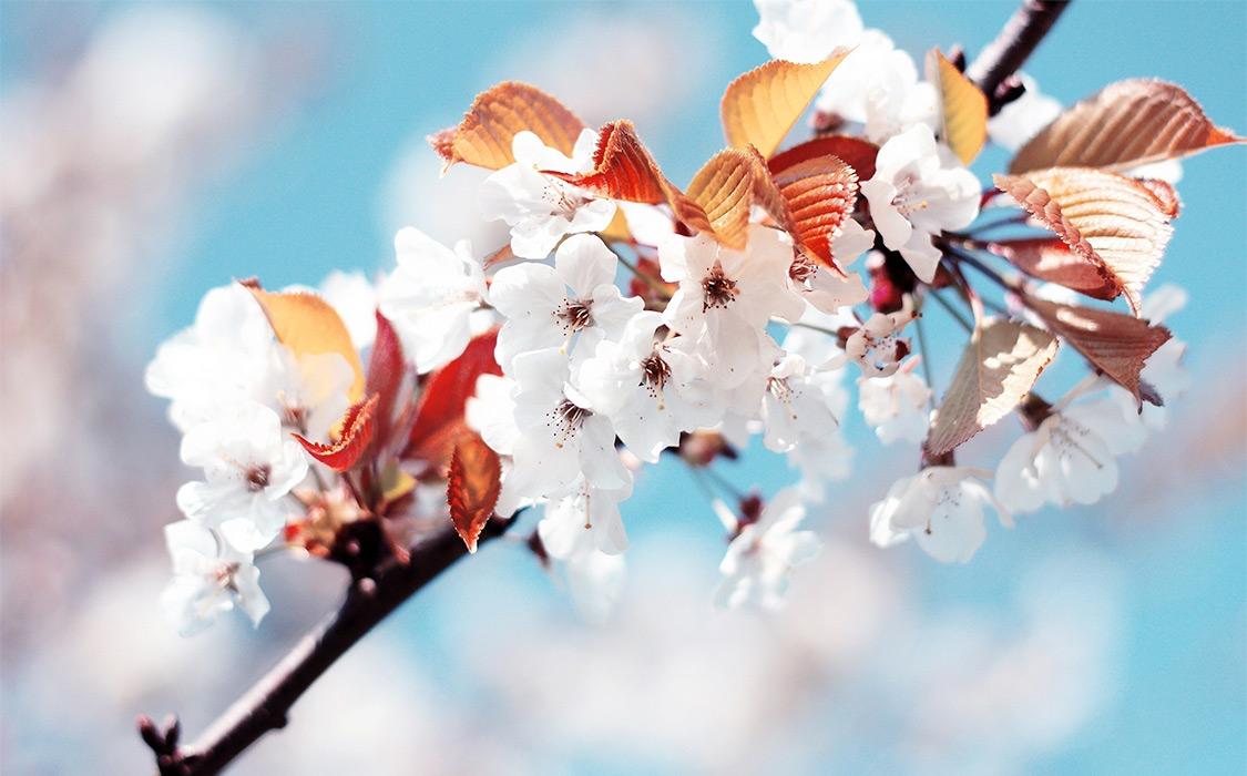 Сделай Коран весной моего сердца